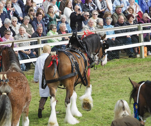 Black Isle Show (Inverness)